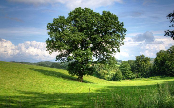 cropped-tree-oak-landscape-view-53435.jpeg