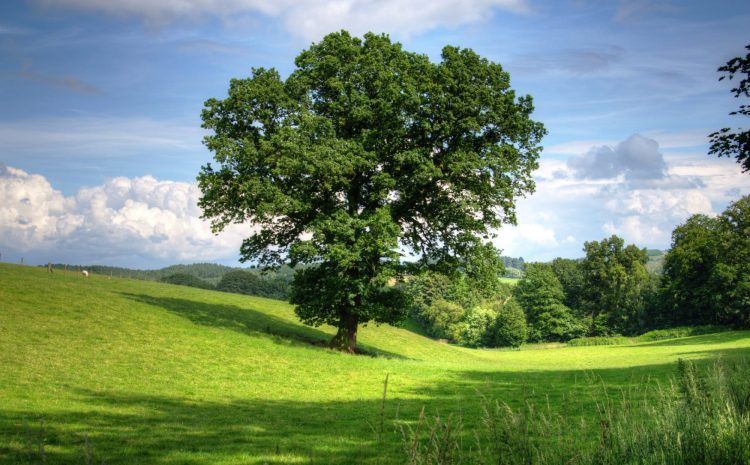 cropped-tree-oak-landscape-view-53435.jpeg