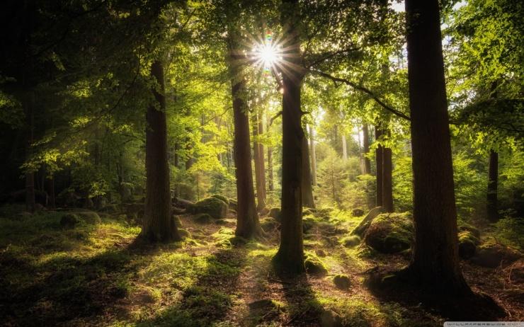 sun_rays_through_trees-wallpaper-1440x900